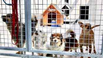 Tiertafel Kassel: Tierheim Wau-Mau-Insel bietet Hilfe für bedürftige Menschen und ihre Tiere an - hna.de