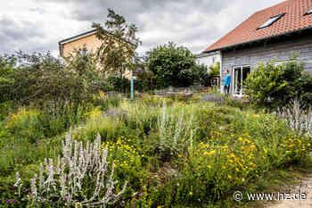 Familie Krause in Gerstetten hat einen naturnahen Garten: Warum wilde Staudenbeete ein Insektenmagnet sind - Heidenheimer Zeitung