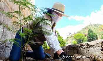 #Parral | Sol Sánchez reforesta el Parque Lineal - Adriana Ruiz