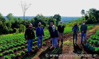 Buscan potenciar el perfil frutihortícola de Cerro Azul - Primera Edicion