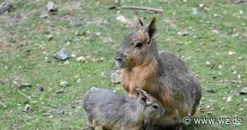 Impfungen sind bei Tieren im Wuppertaler Zoo von unschätzbarem Wert - Westdeutsche Zeitung