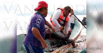 Hallan cadáver del pescador extraviado en la laguna de Catemaco - Vanguardia de Veracruz