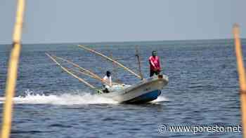 Pescadores de Campeche reportan pérdidas tras primer día de captura de pulpo - PorEsto