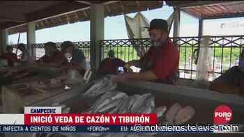 Inició la veda de cazón para protección de la especie en Campeche - Noticieros Televisa