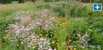 Blühflächen: Ist die Saat des Hegerings aufgegangen? - Nordwest-Zeitung