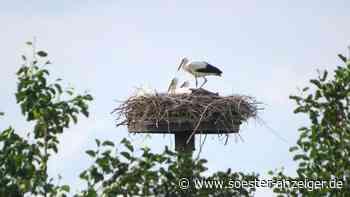 Neues aus dem Storchen-Nest im Norden von Werl - soester-anzeiger.de