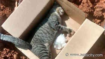 Moradora denuncia envenenamento de gato em Assis - Assiscity