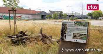 Neue Heimat für Zauneidechsen in Riedstadt - Echo Online