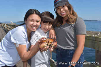 PHOTOS: Catch of the day crawls into Sidney trap – Saanich News - Saanich News