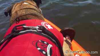 Bulldog shares kisses with wild manatee while kayaking - Yahoo! Voices