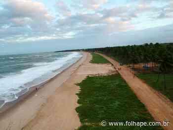 ONG denuncia devastação de restinga em Ipojuca; prefeitura diz que local receberá quadra - Folha de Pernambuco