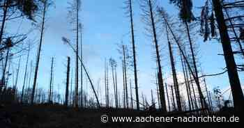Schäden in der Nordeifel: Braucht die Rettung der Wälder mehr Personal? - Aachener Nachrichten