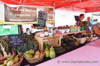 Summer's bounty arrives at Innisfil Farmers' Market (14 photos) - BarrieToday