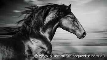 Horsepower the driving force that forged human civilisation - Blue Mountains Gazette