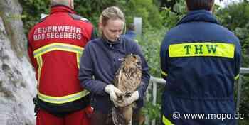 Tierrettungs-Aktion: Feuerwehr Bad Segeberg befreit Uhu - Hamburger Morgenpost