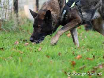 Haben Giftköder ihren Hund getötet? Alte Dame aus Keltern ist verzweifelt - Pforzheimer Zeitung