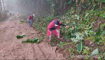 Mingas de trabajo han permitido recuperar vías rurales en Oporapa - Noticias