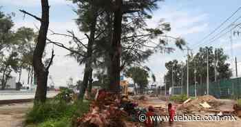 Tira 4,851 árboles obra en Periférico de la Zona Metropolitana de Guadalajara, Jalisco - DEBATE