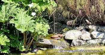 Jardins : trois sorties dans le Pays de Morlaix - Le Télégramme