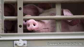 Sozialministerium: Keine Tiertransporte außerhalb der EU - Süddeutsche Zeitung