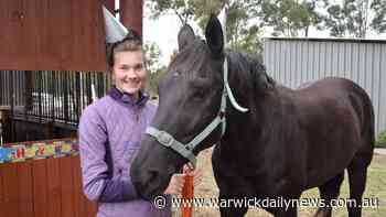 How horses helped distract from disastrous year - Warwick Daily News