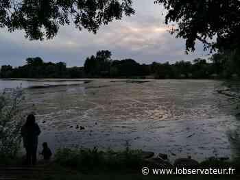 Valenciennes. Les eaux de l'étang du Vignoble envahies par les algues | L'Observateur - L'Observateur