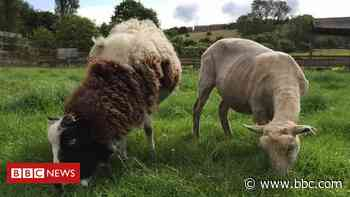 Security kit donated after animals stolen from Brockswood Sanctuary - BBC News