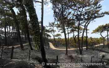 A Anglet, l'incendie qui a ravagé la forêt de Chiberta est d'origine humaine - La République des Pyrénées