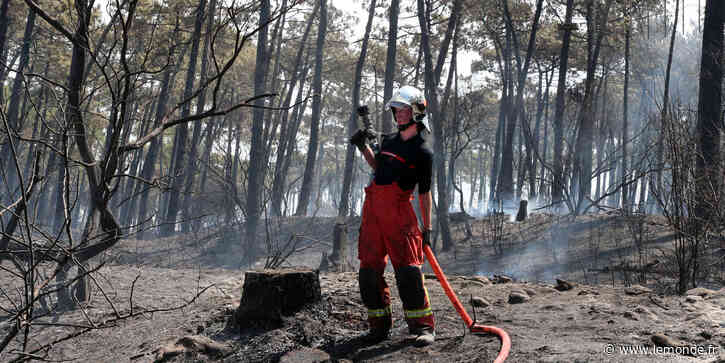 Le feu de forêt à Anglet était « d'origine humaine », selon les premières constatations - Le Monde