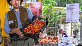 Datteln: Erlös von Tomatenernte an Kinderpalliativzentrum - 24VEST
