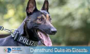 Polizeihund Duke verhindert Flucht nach Schlägerei - Marl - Lokalkompass.de