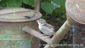 Bilder aus der heimischen Vogelwelt - Wetterauer Zeitung