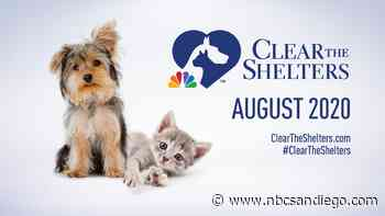 """CLEAR THE SHELTERS """"ADOPT & DONATE"""" DRIVE - NBC San Diego"""