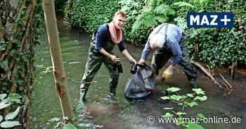 Umweltgruppe Luckenwalde lebendig gestalten sammelt Müll aus der Nuthe am Wehr im Bürgerbusch bei Woltersdorf - Märkische Allgemeine Zeitung