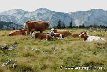 """La Unión de Ganaderos de Vaca Nodriza solicita """"ayudas COVID"""" específicas para el vacuno de carne - Agropopular"""