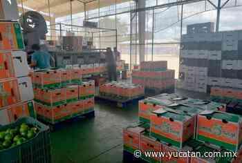 Sube el limón a los $80 por caja - El Diario de Yucatán