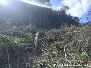 BPMA constata crimes ambientais no distrito de Itaici em Muniz Freire - O Ribanense