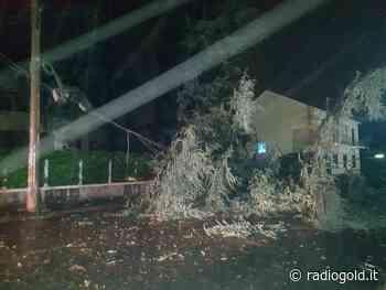 A Spinetta Marengo cade un albero in via Tortona e trancia filo della luce - Radiogold