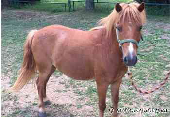 The search is on for a missing pony