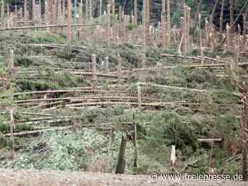 Waldschäden: Gewerkschaft fordert mehr Personal im Forst - Freie Presse