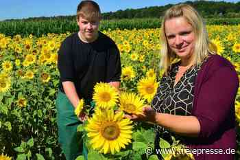 Für ehrliche Pflücker: Tausende Sonnenblumen wachsen nahe Hainichen - Freie Presse