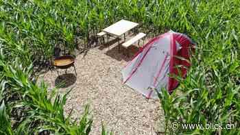 Privat-Camping im Kornfeld kostet 70 Franken die Nacht - BLICK.CH