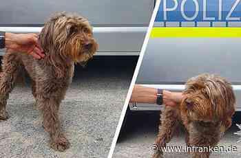 """""""Wem ist diese süße Fellnase entlaufen?"""" - Unterfränkische Polizei sucht Hundebesitzer"""