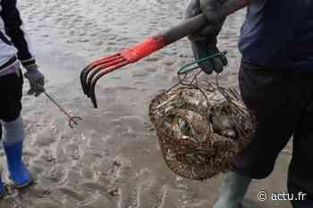 Saint-Gilles-Croix-de-Vie : la pêche à pied est interdite sur la Grande Plage - actu.fr