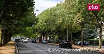 Gießwasser gibt es nur für die jungen Wiesbadener Stadtbäume