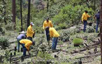 Chihuahua es tercer lugar en reforestación - El Heraldo de Chihuahua