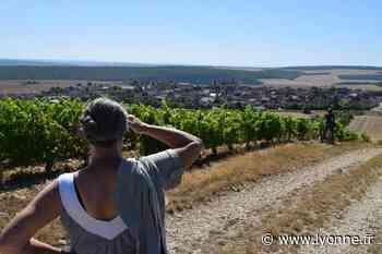 Dépaysement garanti le long des vignes à Coulanges-la-Vineuse - L'Yonne Républicaine