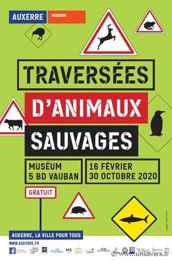 Traversées d'animaux sauvages Muséum d'Auxerre vendredi 18 septembre 2020 - Unidivers