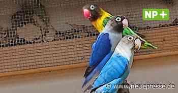 Tierheim Hannover in Langenhagen vermittelt Papageien - Neue Presse