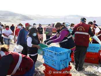 Chimbote: Entregan dos toneladas y media de pescado en San Pedro - El Ferrol de Chimbote